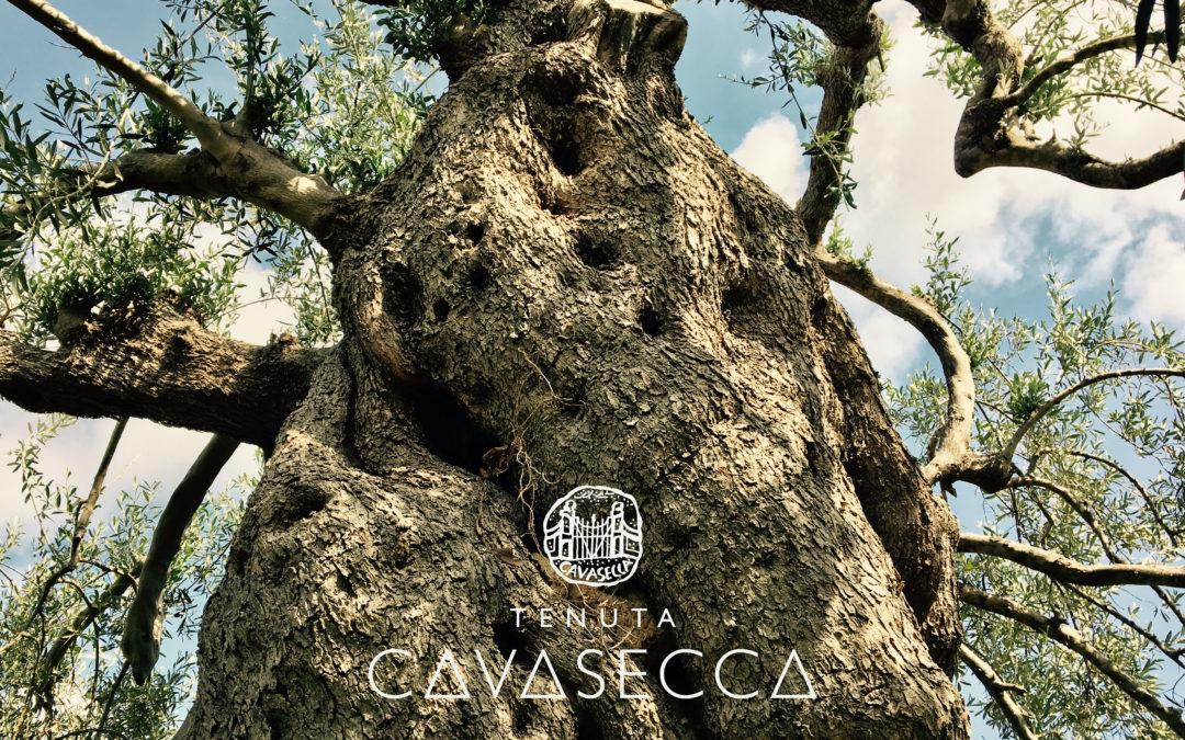 Tenuta Cavasecca: Ode all'Ulivo